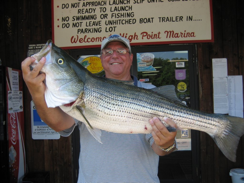 Virginia outdoors lake anna for Lake anna fishing report